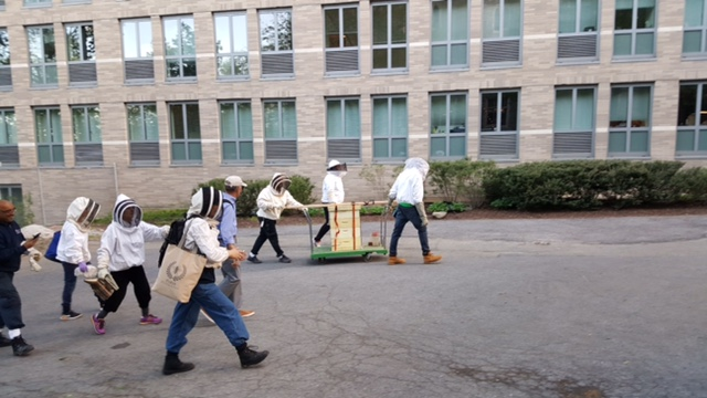 Beekeepers move bees